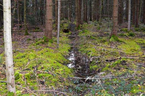 Feuchter Wald